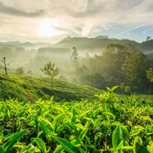 Tourist Attractions In Munnar
