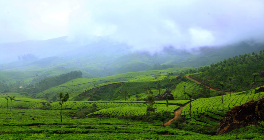 Why Munnar Is Known As The Kashmir Of South India