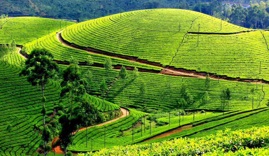 Explore the beauty of Munnar
