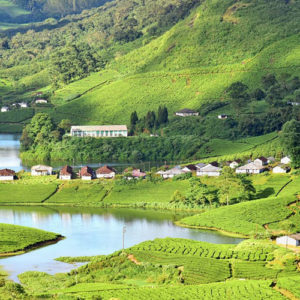 Some other attractions in Munnar