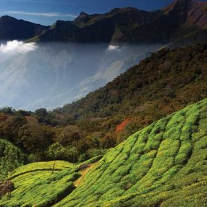 Kerala Tourism :  How much Tourists Love our Munnar?