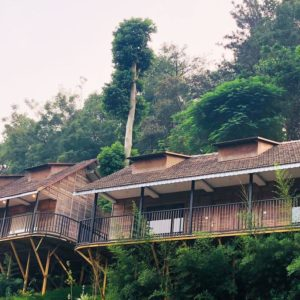 Best Time To Visit Munnar : Have A Monsoon Voyage