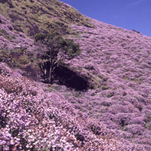 Best Time To Visit Munnar : Seasons Proclaimed By Blossoming