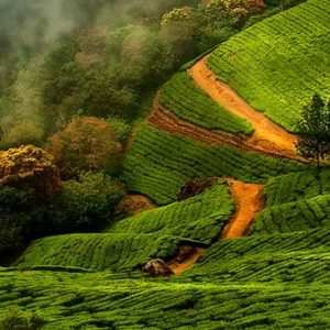Munnar Attractions : Top Ten Places To Visit In Munnar