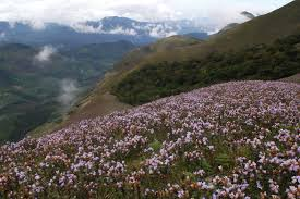 munnar attractions