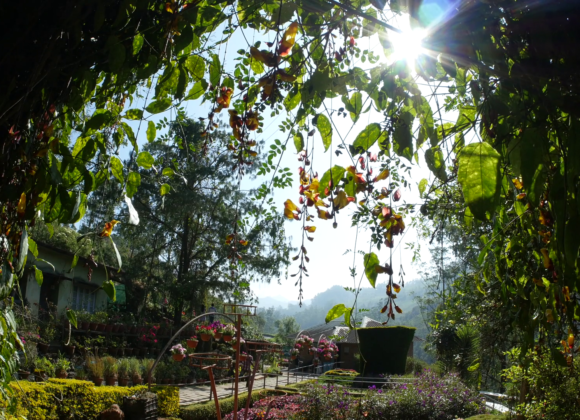 Munnar : Flower Gardens To Welcome New Guests