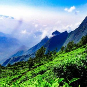 Munnar Tourist Places : Checklist For Munnar Trip